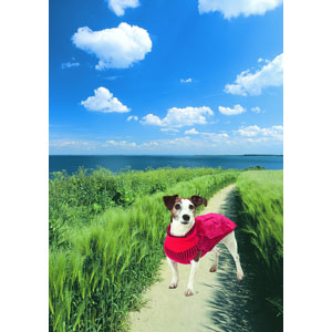 Dog Sweater Sunny with Rain Cape