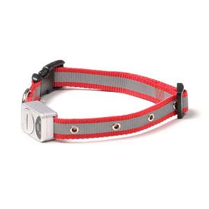 LED Halsband Rot