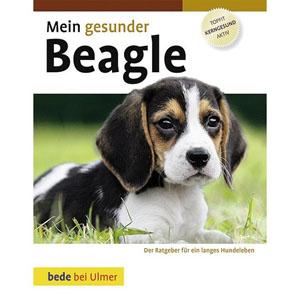 Beagle,