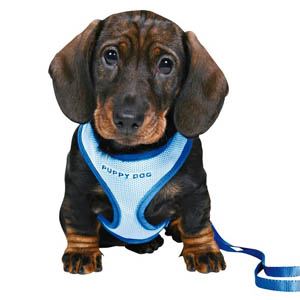 Puppy Soft Harness With Lead - Blue