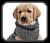 Hundebekleidung